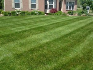 Lawn care, landscaper, lawn mowing, landscaping, mowing service, landscape service, mowing, cuyahoga falls ohio, cuyahoga falls oh, 44223, 44221,