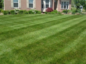 tallmadge ohio 44278, mowing and lawn care,