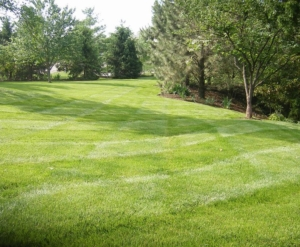 lawn care in norton ohio, 44203,