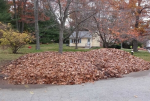 piling leaves, leaf cleanup, akron ohio, northeast ohio, summit county ohio, mowing,