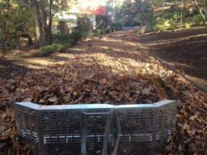 leaf, leaves, cleanup, clean up, barberton, akron ohio, kenmore ohio, goodyear heights,