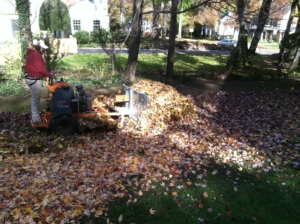 leaf plow, leaves, fall color, akron ohio, cuyahoga falls, richfield ohio, leaf,