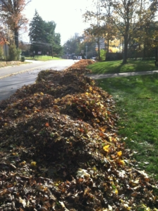 piles of leafs, akron ohio, new frankling ohio, leaf cleaning, fall cleaning, grass,