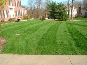 edger, stow ohio, munroe falls, 44224, wadsworth ohio, edging, handheld blower, lady bug, richfield ohio, 44286, lawn care, lawn mowing, landscaping, landscaper,