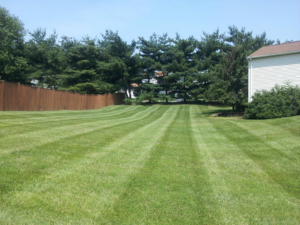 woods, white pine, lawn care, lawn aeration, ohio,