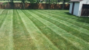 droughting, drought, brown grass, mowing pattern, akron ohio, landscaping,