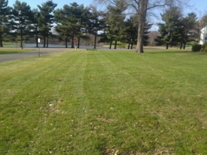 barberton aeration service, ohio aeration, aerating a lawn, akron ohio, grass,