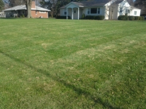 44319, mowing, lawn care, green, akron ohio,