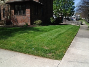 firestone park ohio edging, lawn care,