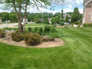 new franklin, 44319 aerated lawn,