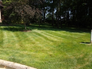 44312 springfield township ohio, lawn care, mowing,