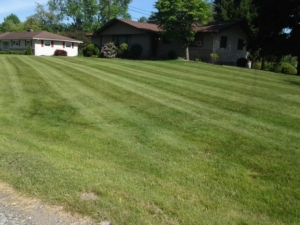 44312 lawn care, springfield township ohio
