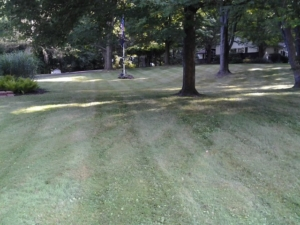 clinton ohio lawn mowing, 44216,