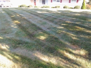 copley ohio lawn care, feed, 44321,