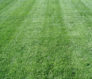 lawn mowing, akron ohio, lawn care,