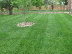 lawn care in clinton ohio, 44216,