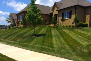 Mowing, Mower Stripes, Landscaping