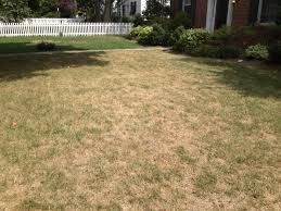 grass, Lawn care, landscaper, lawn mowing, landscaping, mowing service, landscape service, mowing, akron ohio mowing company,