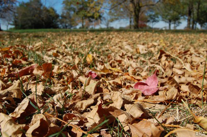 leaf, leaves, clean up, fall clean up, lawn care, ohio,
