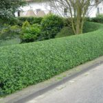 hedge pruning services, lawn care, landscaping, lawn mowing, grass, landscaper, mowing service, fairlawn ohio,