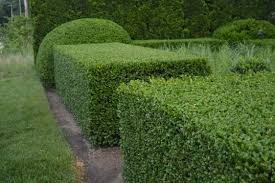 hedge pruning, shrub trimming, landscaper, lawn service, fairlawn ohio,