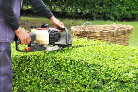 Lawn care, landscaper, lawn mowing, landscaping, mowing service, landscape service, mowing, shrub pruning, shrub trimming, hedge pruning, hedge trimming, shrub, hedge, bush, landscape, grass mowing,