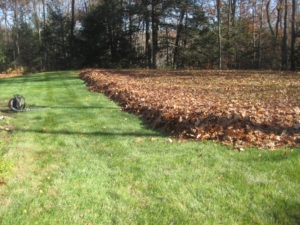 lawn care, landscape, fall leaf cleanup, clean up