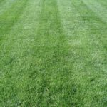lawn care, landscaping, lawn mowing, 44313, landscaper, mowing service, fairlawn oh, fairlawn ohio, grass,