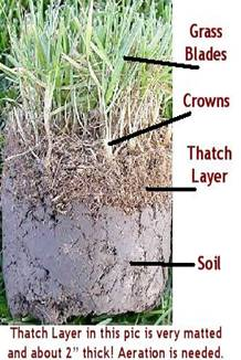 thatch layer, thatch build up, soil, grass blade, grass plant, lawn care, akron ohio, aeration, north canton ohio, 44720, lawn core aeration, grass seed, overseeding, fertilization, lawn company, turf