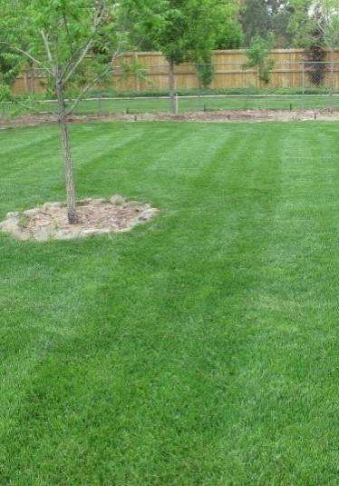 Lawn care, landscaper, lawn mowing, 44319, landscaping, mowing service, mowing, coventry township ohio, coventry oh, coventry township oh,