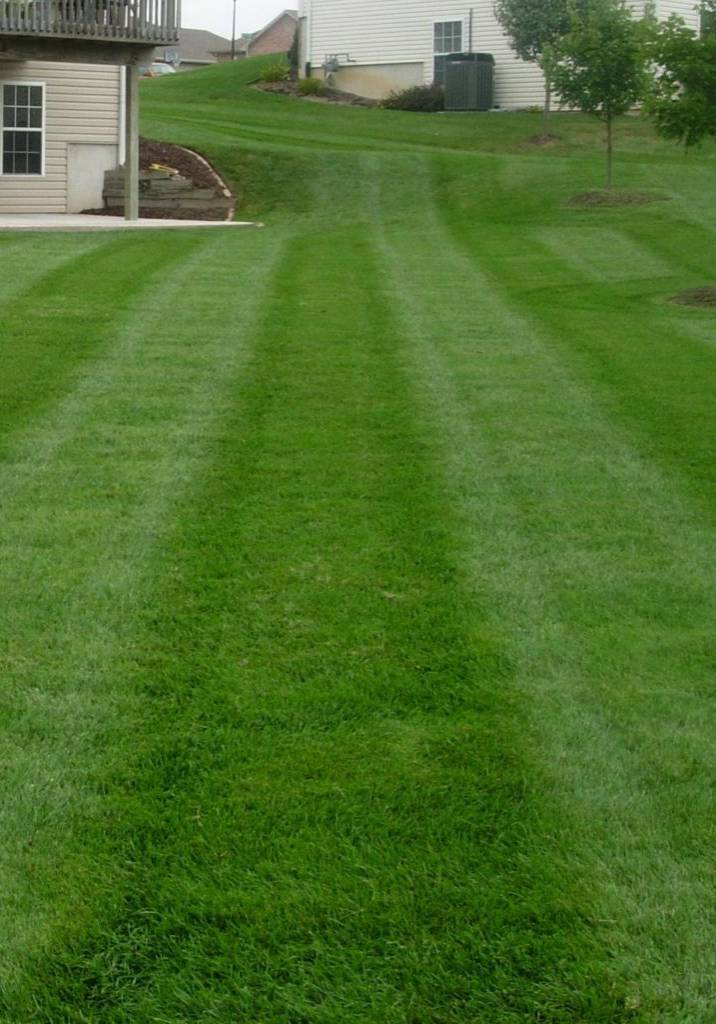 Lawn care, landscaper, lawn mowing, landscaping, mowing service, lawn maintenance, landscape service, mowing, springfield township ohio, springfield township oh, springfield oh, springfield ohio, 44312,